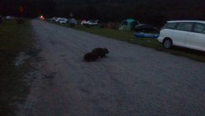 Figura 2. Wombats in the nigth, como bien sabemos.